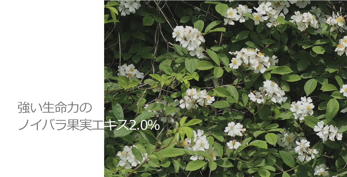 強い生命力のノイバラ果実エキス2.0%[収穫時期:2020年5月]