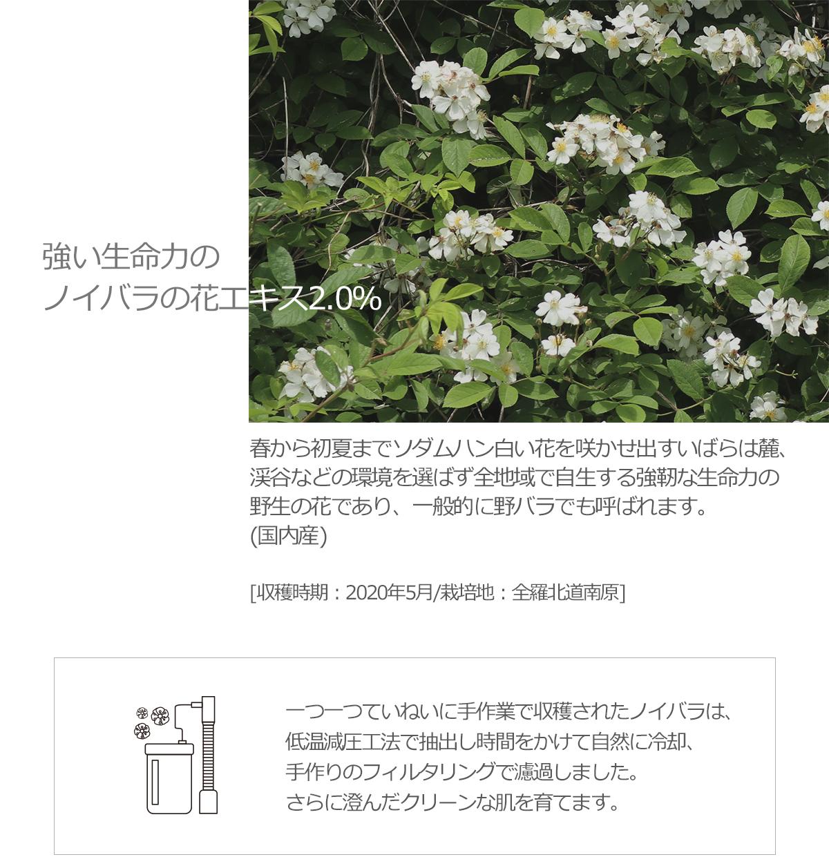 強い生命力のノイバラの花エキス2.0% 春から初夏までソダムハン白い花を咲かせ出すいばらは麓、渓谷などの環境を選ばず全地域で自生する強靭な生命力の野生の花であり、一般的に野バラでも呼ばれます。(国内産) [収穫時期:2020年5月/プランテーション:全北南原市サンネミョン] 一つ一つていねいに手作業で収穫されたノイバラは、低温減圧工法で抽出し時間をかけて自然に冷却、手作りのフィルタリングで濾過しました。さらに澄んだクリーンな肌を育てます。